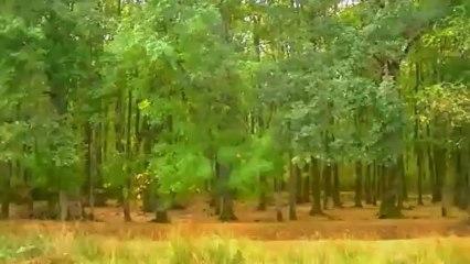 Paduraru - Prolife (Proghouse Music Video Mix) FullHD