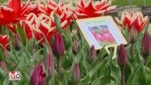 Le printemps des serres clermontoises