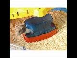 ilgazpet köpek mama kedi mama kuş yemi balık yemi aksesuar resimleri videosu