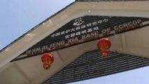 62 giant pandas survive China earthquake
