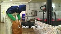 La pêche durable en Bretagne Economie