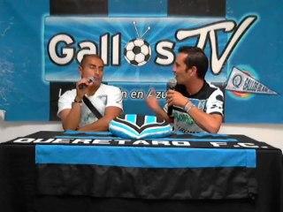 Gallos TV 311