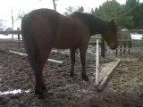 ecurie du val chevaux
