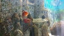 Crabe aux pinces rouges