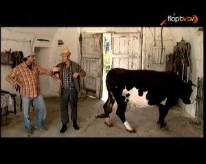 Barz - 1x36 - La vacca