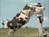 funny cow kung fu fight HD