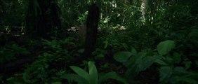 Il Etait Une Forêt : bande annonce #1 HD