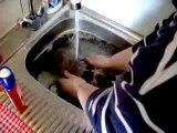 Lulu lapinou prend son bain, encore...