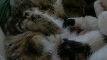 Les chatons à quelques heures de vie