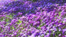 Le printemps et ses fleurs à Crisnée