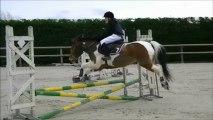 équitation concours de saut d'obstacles