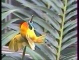 animaux d'Afrique les oiseaux épisode 4