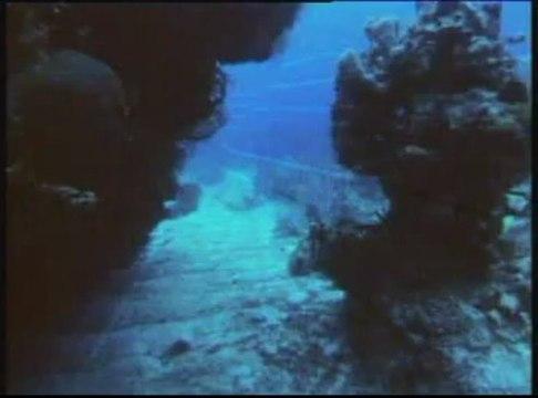 Καρχαρίες:Δολοφόνοι ή θύματα;