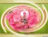 Ya Ali(ra) Mola Ali(ra) Mushkil Kusha Mola Ali(ra) - Qawali Sabri Brothers (Mobile)
