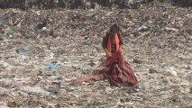 Festival de Cannes 2013  super trash tapis rouge polémique pétition
