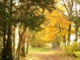 Chambres d'hôtes Piscine Nature Parc Haute-Saône
