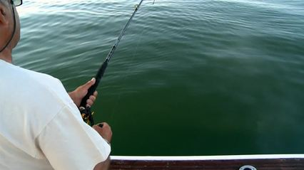 Striped Bass Fishing In New York