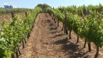 Το επίσημο κρασί του Κρεμλίνου φτιάχνεται στο Άγιον Όρος