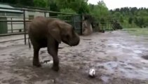 Psychic elephant Nelly predicts Bayern Champions League win