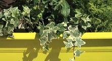 Balcon mi-ombre mi-soleil, le bon choix des plantes
