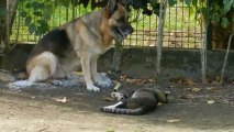 Mon chien mon chat mes zamours
