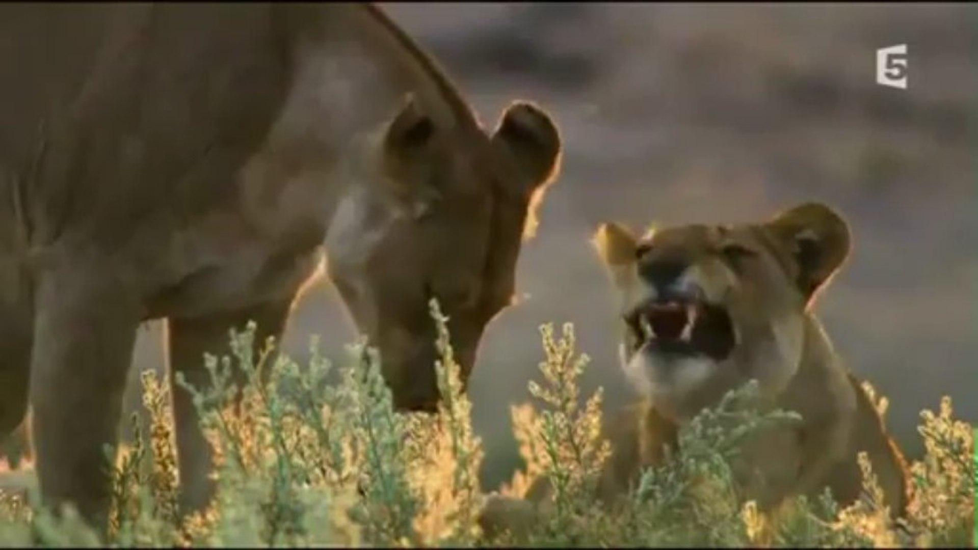 Les prédateurs de la savane, une lutte pour la survie documentaire complet  en francais
