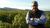 """Vins de Bourgogne : le Mâconnais veut réparer """"une injustice"""" historique"""