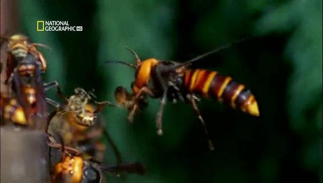 NG | Böcek Savaşları