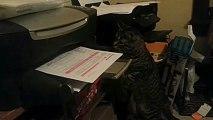 Un chat attaque une imprimante..trop marrant