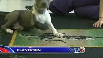 Rescued Puppy Receives Prosthetic Paw