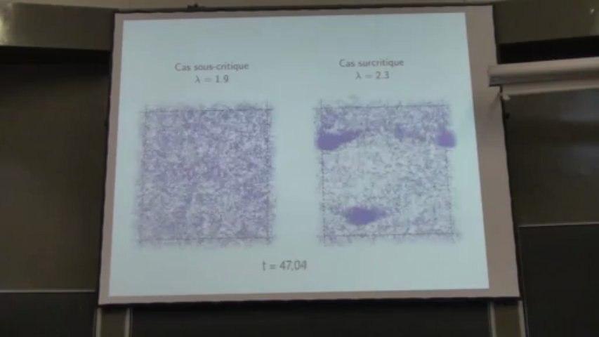 Modélisation de l'alignement dans les sociétés animales (bancs de poissons, nuées d'oiseaux) : limites cinétiques et transitions de phase, par Amic Frouvelle