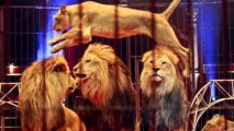 L'Inghilterra bandisce gli animali selvaggi dai circhi