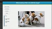 Wordpress Image Plugin - Photo Gallery Inside Wordpress