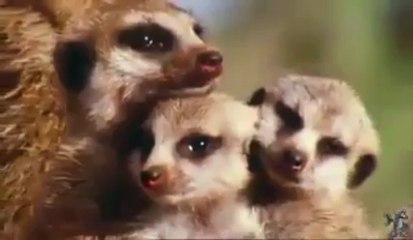 Gli animali sono un dono della vita! Proteggiamo la biodiversità!
