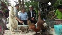 La police thaïlandaise démantèle un trafic d'animaux...