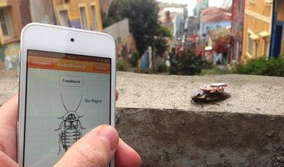 Contrôler les mouvements d'un cafard vivant avec un téléphone portable.