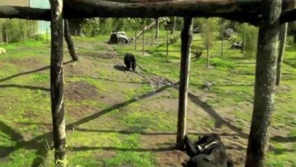 L'île aux Lémuriens ! Petite visite au zoo du Bassin !