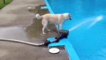 This Dog Isn't The Smartest