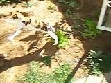Gözleri görmeyen kedi ve yavru köpek (24.03.2007) Talip KÖSEOĞLU' NUN kedisi ve köpeğiydi bir zamanlar ( kediye araba çarptı, köpek ise bir şerefsiz tarafından zehirlendi)