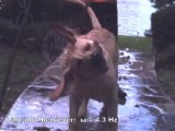 Wet dog shaking in slow motion - the science behind a wet dog shaking