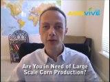 Buy Bulk Corn, Maize, Corn Ethanol, Corn Ethanol Production, Ethanol from Corn, Ethanol Corn