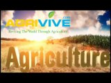 Buy Bulk Corn, Maize, Corn Ethanol fuel, Making Ethanol from Corn, Ethanol and Corn, Ethanol Corn