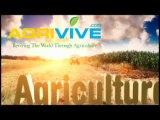 Buy Bulk Corn, Maize, Corn Agriculture Commodities, Corn Crop Production, Corn Crops, Buy Maize