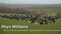 Rhyce Williams- 800 Vaches laitiers 100% a l'herbe -Pays De Galles PâtureSens Interview