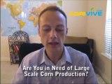 Bulk Wholesale Corn Dealer, Maize, Dry Corn, Dry Corns, Transacting in Corn Stock, Cornbank, Cornstock