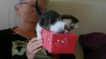 Mamie joue avec les chatons