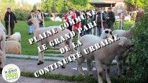 """Assises de Plaine Commune : Balade """"A saute-mouton"""" - marcher la ville"""
