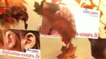 Sorbonne économie et gestion d'entreprise, Sorbonne économie et gestion d'entreprise, Sorbonne économie et gestion d'entreprise, Sorbonne UFR 06, Sorbonne UFR 02, assas, dauphine