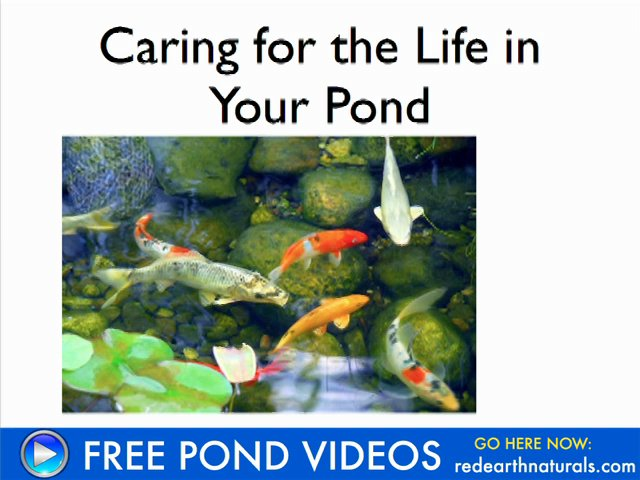Cleaning Ponds with Pond Straw – Video Training