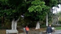 JARDIN BOTANIQUE --  SANTA CRUZ -- ÎLE DE TENERIFE (CANARIES) en MARS 2013